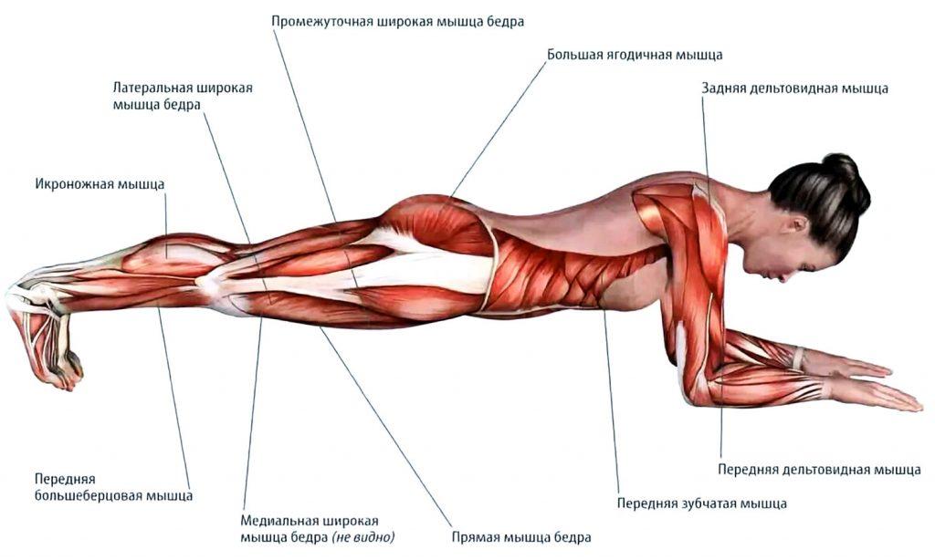 Мышцы в планке